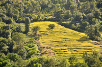 Ancient rice fields are terraced out of the mountainsides and valleys.