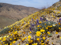Wild flower mountainsides